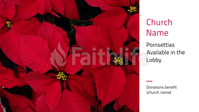 Poinsettias Available in the Lobby large preview