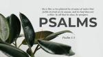 Foliage Psalms  PowerPoint Photoshop image 1