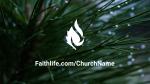 Pine Needle faithlife 16x9 PowerPoint image