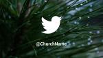 Pine Needle twitter 16x9 PowerPoint image